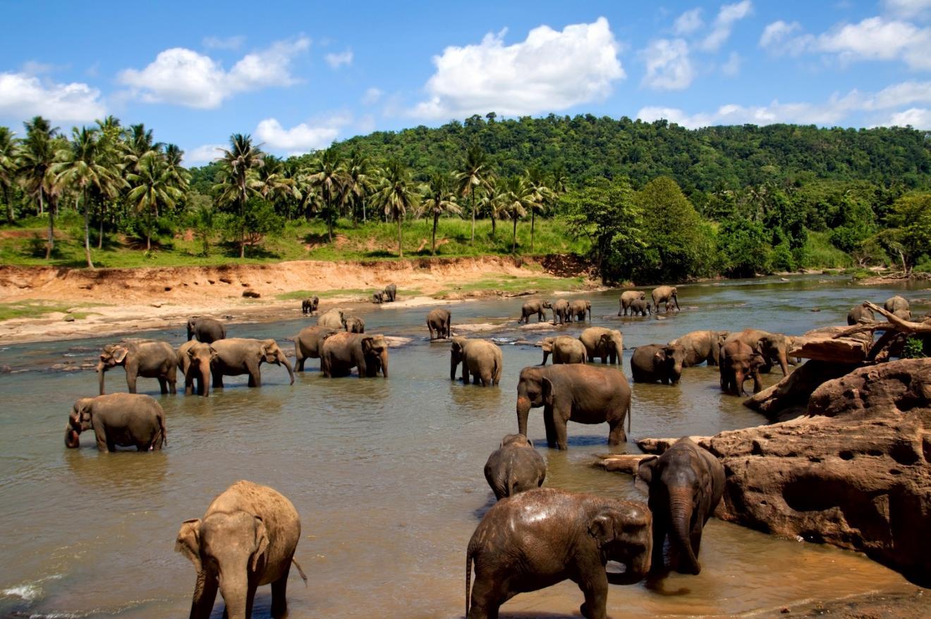 Merveille du Sri Lanka