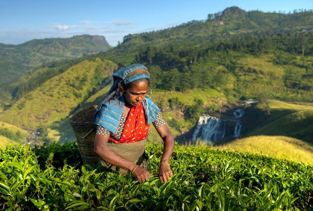 Splendeurs du Sri lanka