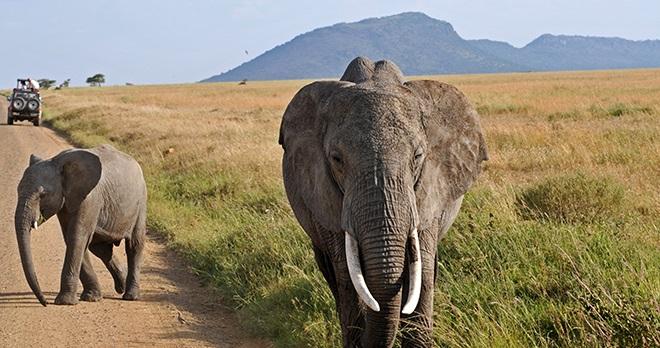 Offre - Destination : Afrique du Sud
