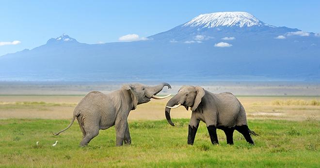 Offre - Destination : Tanzanie