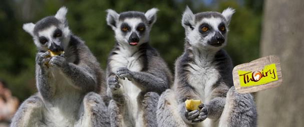 Venez arpenter le Zoo de Thoiry, un véritable safari au coeur d'un l'écosystème de plus de 50 espèces différentes ! PARC DE THOIRY à partir de 68 € ttc au lieu de 68 € ttc