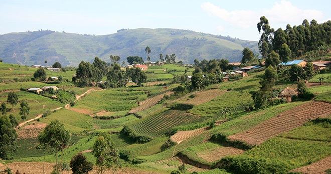 Offre - Destination : Rwanda