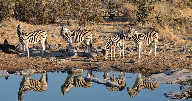 Etosha National Park - copyright Grobler du Preez/shutterstock